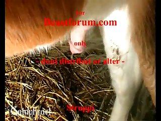 Fuck horse porn